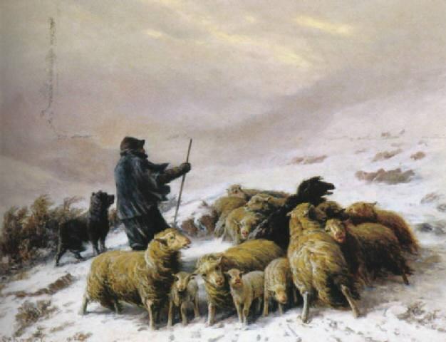 Moutons dans la neige